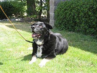 Shepherd (Unknown Type) Mix Dog for adoption in McArthur, California - Meiko