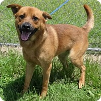 Adopt A Pet :: Sonny - Olive Branch, MS