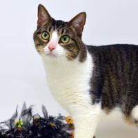 Adopt A Pet :: Peanut - Dayton, OH