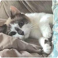 Adopt A Pet :: George Clooney - Holland, MI