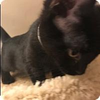 Adopt A Pet :: Raven - Chicago, IL