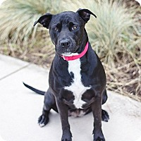 Adopt A Pet :: Coco - Berkeley, CA