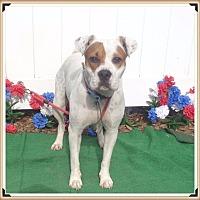 Adopt A Pet :: MADGE - Marietta, GA