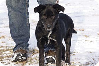 Labrador Retriever Mix Puppy for adoption in Elyria, Ohio - Oreo