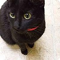 Adopt A Pet :: Ravenclaw - Mobile, AL