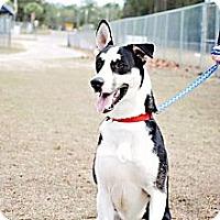 Adopt A Pet :: Bona - Crawfordville, FL