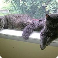 Adopt A Pet :: Momma & Sammy - Portland, ME