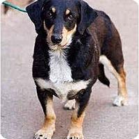 Adopt A Pet :: Franky - Portland, OR