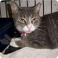 Adopt A Pet :: Ana - Bayonne, NJ