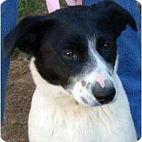 Adopt A Pet :: Hammer - Harrison, AR