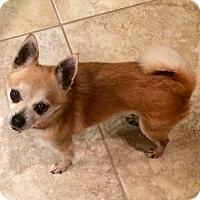 Adopt A Pet :: Paco - Donaldsonville, LA