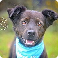 Adopt A Pet :: Zipper - Fort Valley, GA