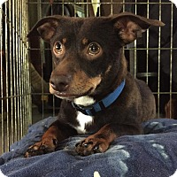 Adopt A Pet :: Lewie - Baltimore, MD