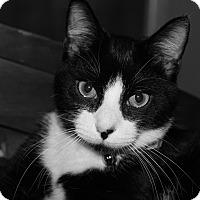 Adopt A Pet :: Elroy - Speonk, NY