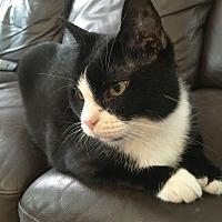 Adopt A Pet :: Harah - Marietta, GA