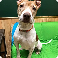 Adopt A Pet :: Alexis (P4P) - Maryville, MO