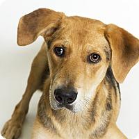 Adopt A Pet :: Odysseus - Baton Rouge, LA