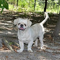 Adopt A Pet :: Keebler - Camden, SC