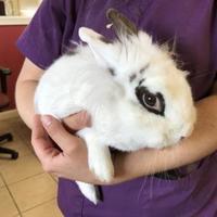 Adopt A Pet :: Melvin - E. Brookfield, MA