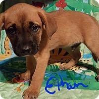 Adopt A Pet :: Ethan - Niagra Falls, NY