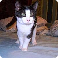Adopt A Pet :: Lucinda - Tarboro, NC