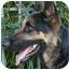 Photo 3 - German Shepherd Dog Mix Dog for adoption in Los Angeles, California - Zack von Zelinger
