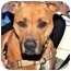 Photo 2 - American Pit Bull Terrier Mix Dog for adoption in Vista, California - Zoey