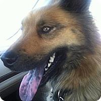 Adopt A Pet :: Tylee - Carey, OH