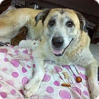 Adopt A Pet :: Tessa - Adamsville, TN