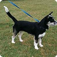 Adopt A Pet :: Parsley - Southampton, PA
