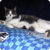 Adopt A Pet :: Bubba - Modesto, CA