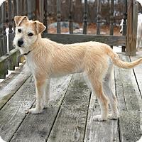 Adopt A Pet :: *Lily - PENDING - Westport, CT