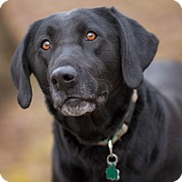 Adopt A Pet :: Gabby - Lewisville, IN