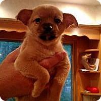 Adopt A Pet :: Yoda - Marlton, NJ