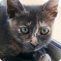 Adopt A Pet :: Taylor - Irvine, CA