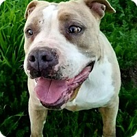 Adopt A Pet :: Whitney - Romoland, CA