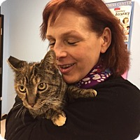 Adopt A Pet :: Clementine - Manchester, CT