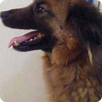 Adopt A Pet :: Sisso - Los Angeles, CA