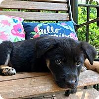 Adopt A Pet :: Caspian (RBF) - Hagerstown, MD