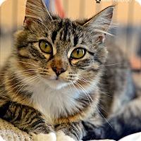 Adopt A Pet :: Alpine - Ringgold, GA