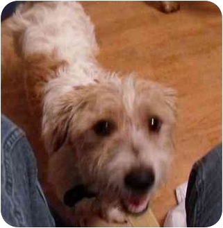 Jack Russell Terrier Dog for adoption in Meridian, Idaho - Jimi