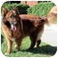 Photo 4 - Collie/Belgian Tervuren Mix Dog for adoption in Los Angeles, California - Turk