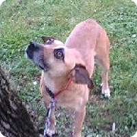 Adopt A Pet :: Shotgun - Staunton, VA