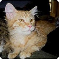 Adopt A Pet :: Rosco - Davis, CA