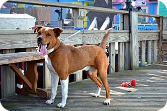 Boxer Mix Dog for adoption in Freeport, New York - Bruno
