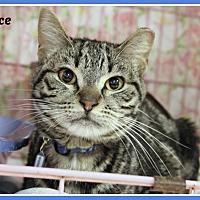 Adopt A Pet :: Wallace - New Richmond,, WI