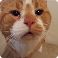 Adopt A Pet :: Blue eyes - Chesterfield, VA