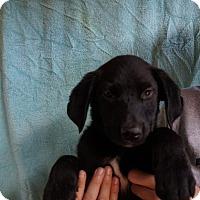 Adopt A Pet :: Grizzie - Oviedo, FL