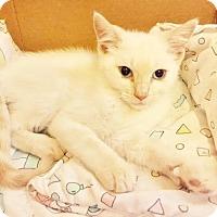 Adopt A Pet :: ANNIE - Burlington, NC