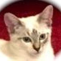 Adopt A Pet :: Maisy (pink collar) - Palo Alto, CA